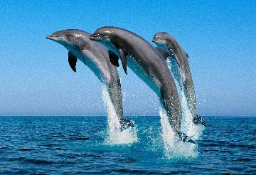 DolphinTrips